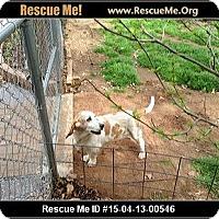 Adopt A Pet :: Sophia - Littleton, CO