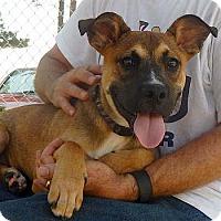 Adopt A Pet :: Max - Athens, GA