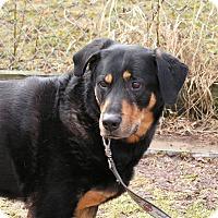 Adopt A Pet :: Inouk - Rigaud, QC