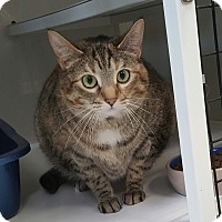 Adopt A Pet :: Reva - La Grange Park, IL