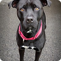 Adopt A Pet :: Razor - Marlinton, WV