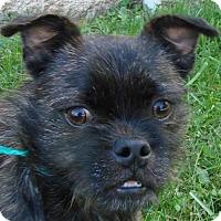 Adopt A Pet :: Amigo - Erwin, TN