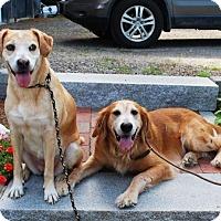 Adopt A Pet :: Sara and Rachel - New Canaan, CT