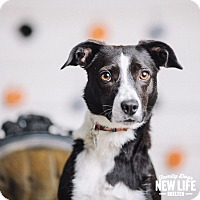 Adopt A Pet :: Razzie - Portland, OR