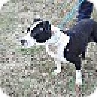 Terrier (Unknown Type, Medium) Mix Dog for adoption in Silver Spring, Maryland - Bailey