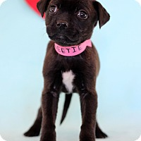 Adopt A Pet :: Sweetie - Waldorf, MD