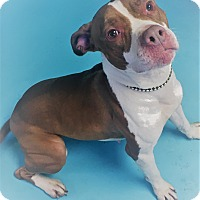 Adopt A Pet :: Ginny - Monroe, MI
