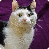 Adopt A Pet :: Mr. Fritz - Greenwood, SC
