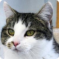 Adopt A Pet :: Peaches - Republic, WA
