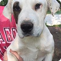 Adopt A Pet :: Sasha - Kittery, ME