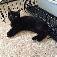 Adopt A Pet :: Dublin - St. Louis, MO