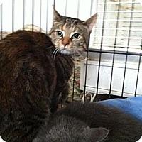 Adopt A Pet :: Noel - Pittstown, NJ