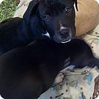Adopt A Pet :: JoJo - Costa Mesa, CA