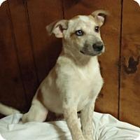 Adopt A Pet :: Merlot - Houston, TX