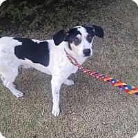 Adopt A Pet :: Calvin - Simi Valley, CA