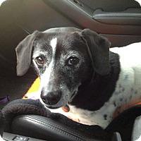 Adopt A Pet :: Russell - Homewood, AL