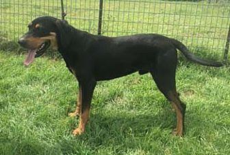 Hound (Unknown Type) Mix Dog for adoption in Seguin, Texas - Wyatt