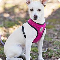 Adopt A Pet :: Abby - Conyers, GA