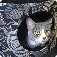 Adopt A Pet :: Elivia - Covington, VA