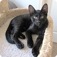 Adopt A Pet :: Donald - Lebanon, PA