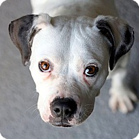 Adopt A Pet :: Tampa - Reisterstown, MD
