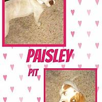 Adopt A Pet :: Paisley - Bogalusa, LA
