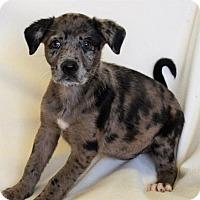 Adopt A Pet :: THAI - New Iberia, LA