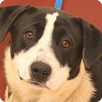 Adopt A Pet :: Joel - McDonough, GA
