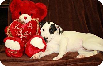 Labrador Retriever/Terrier (Unknown Type, Medium) Mix Puppy for adoption in Newark, New Jersey - Jill