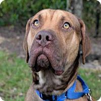 Adopt A Pet :: KYLE - West Palm Beach, FL