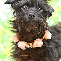 Adopt A Pet :: Daphne - Dublin, CA