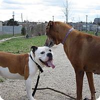 Adopt A Pet :: Spud - Cambridge, ON
