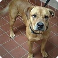 Adopt A Pet :: Apollo - Daytona Beach, FL