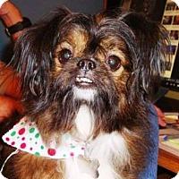 Adopt A Pet :: Miss Maggie - Brattleboro, VT