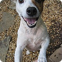 Adopt A Pet :: Reed - Thomasville, NC