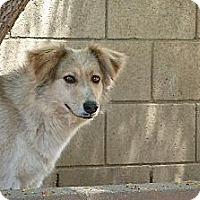 Adopt A Pet :: ABBY - Mission Hills, CA