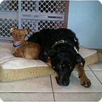 Adopt A Pet :: Chico - Pending - Vancouver, BC