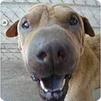 Adopt A Pet :: Honey - Fowler, CA