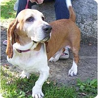 Adopt A Pet :: George - Allentown, PA
