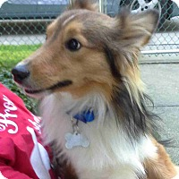 Adopt A Pet :: Auggie (Adopted) - Pittsburgh, PA
