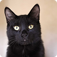 Adopt A Pet :: Frontier - Chicago, IL
