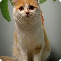 Adopt A Pet :: Diesel - Byron Center, MI