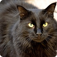 Adopt A Pet :: Flannery - Byron Center, MI