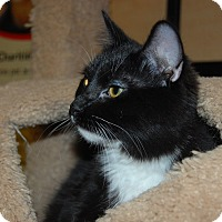 Adopt A Pet :: Jane - Whittier, CA