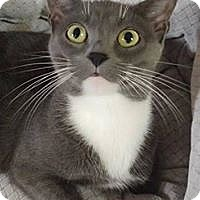 Adopt A Pet :: Cassie - Chestertown, MD