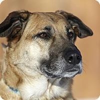Adopt A Pet :: Iris - Ile-Perrot, QC