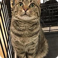 Adopt A Pet :: Angelo - Smithtown, NY