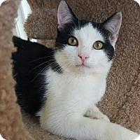 Adopt A Pet :: Mickey - Waxhaw, NC