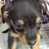 Adopt A Pet :: WREN - Anderson, SC