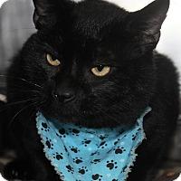 Adopt A Pet :: CHEETO - Clayton, NJ